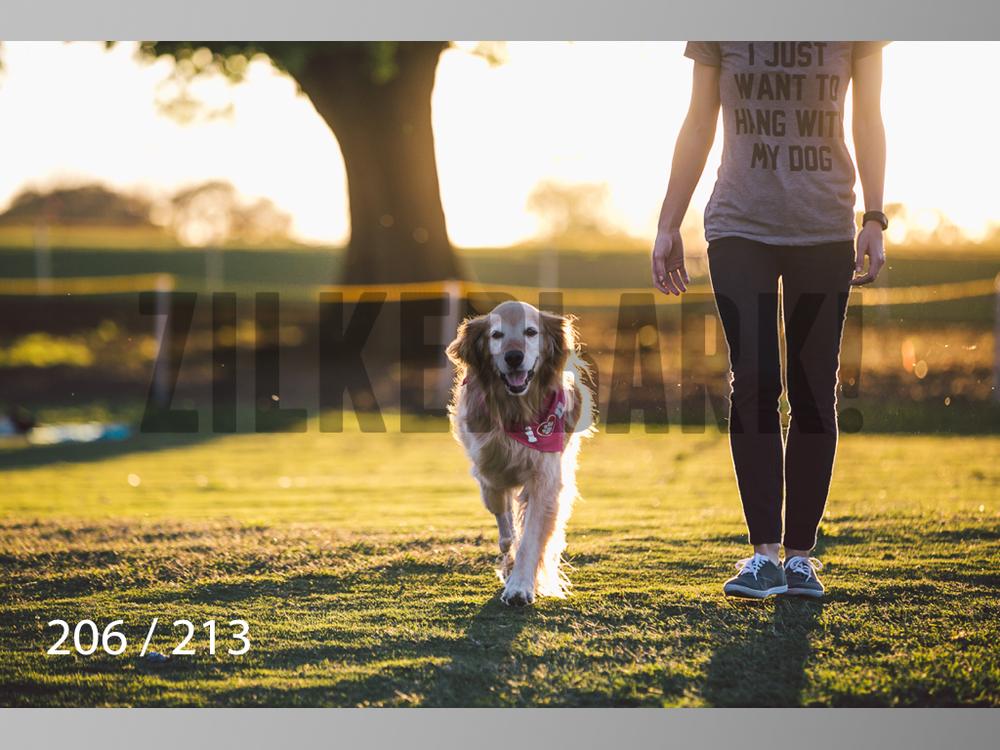 Dogs Rest WM-206.jpg