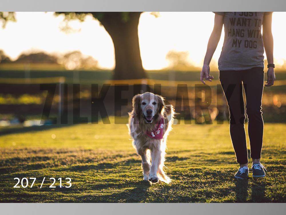 Dogs Rest WM-207.jpg