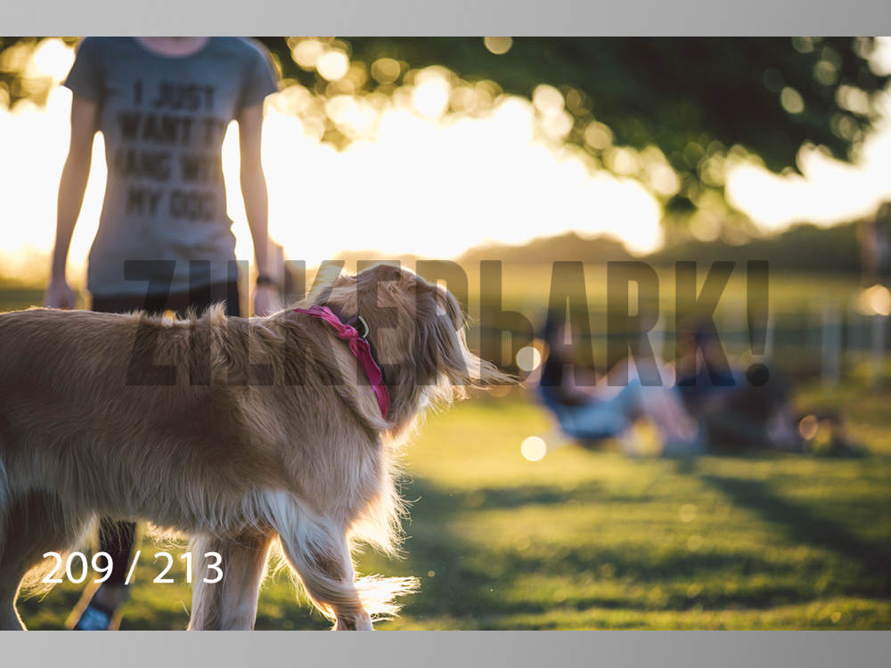 Dogs Rest WM-209.jpg