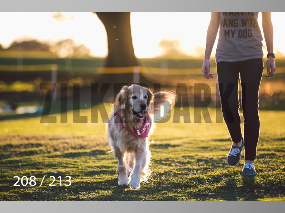 Dogs Rest WM-208.jpg