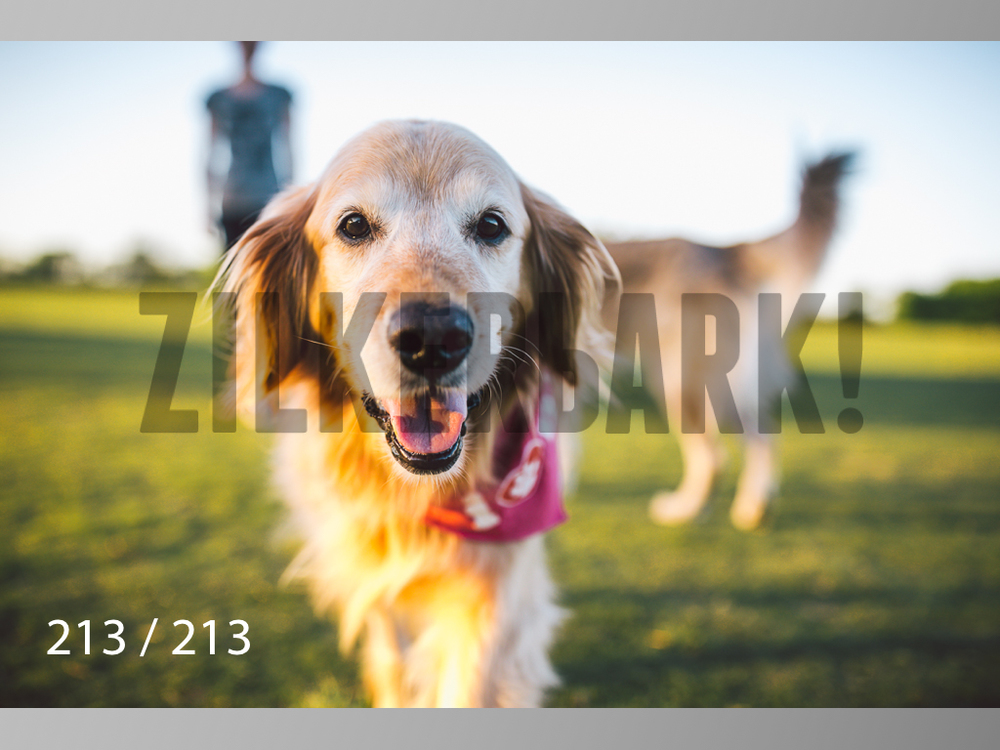 Dogs Rest WM-213.jpg