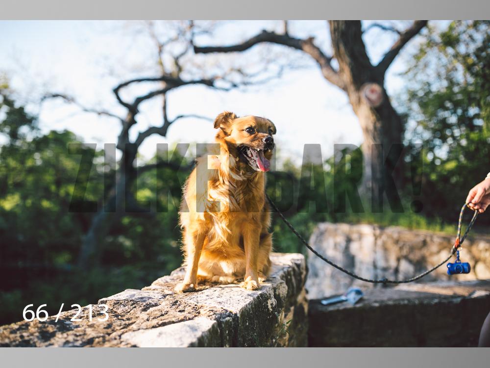 Dogs Rest WM-066.jpg