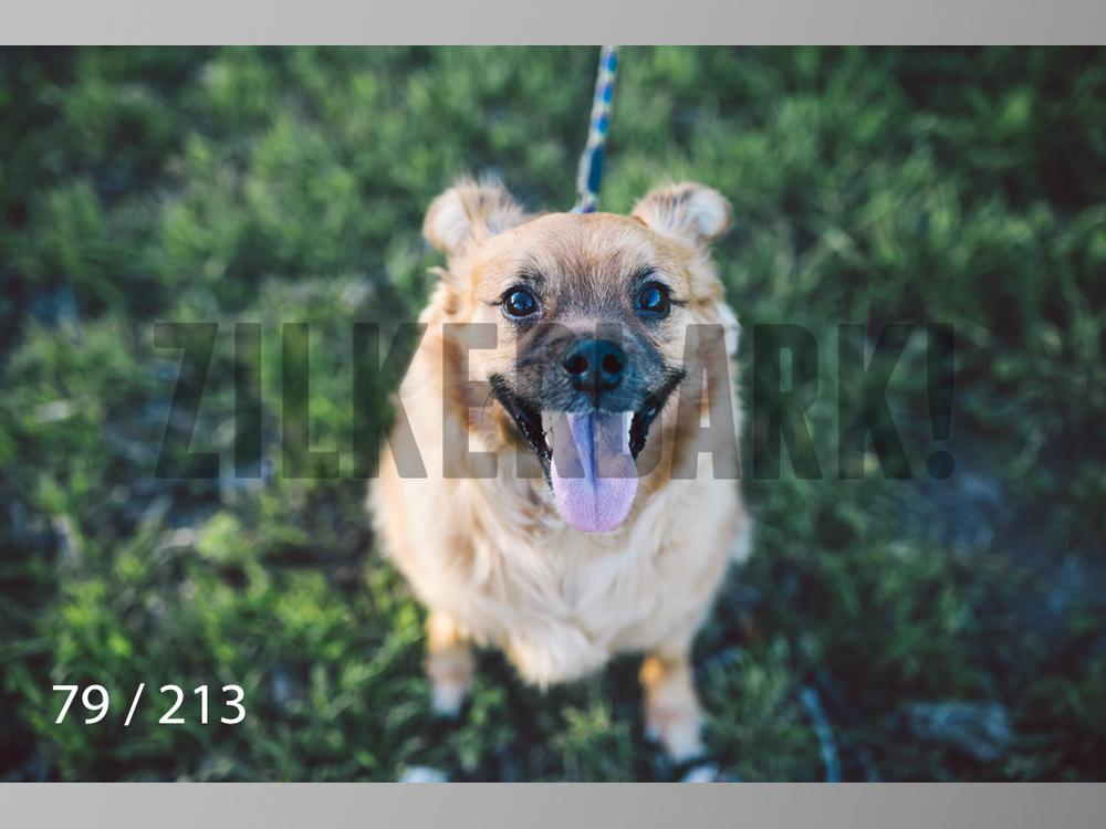 Dogs Rest WM-079.jpg
