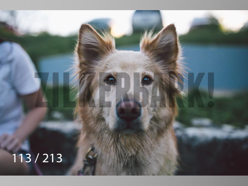 Dogs Rest WM-113.jpg