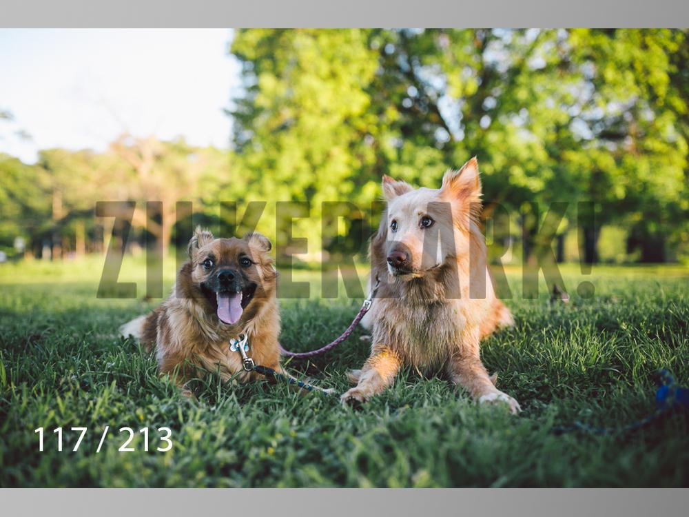 Dogs Rest WM-117.jpg
