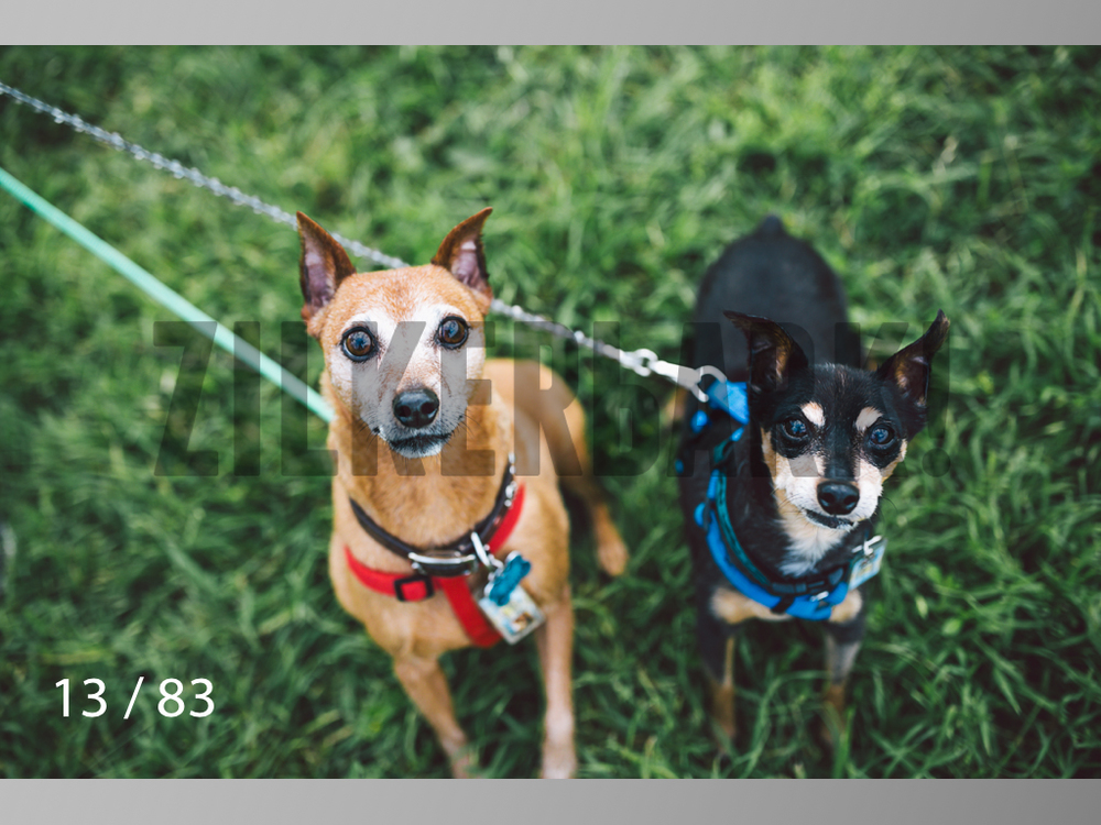 Rocky and Rusty-13.jpg