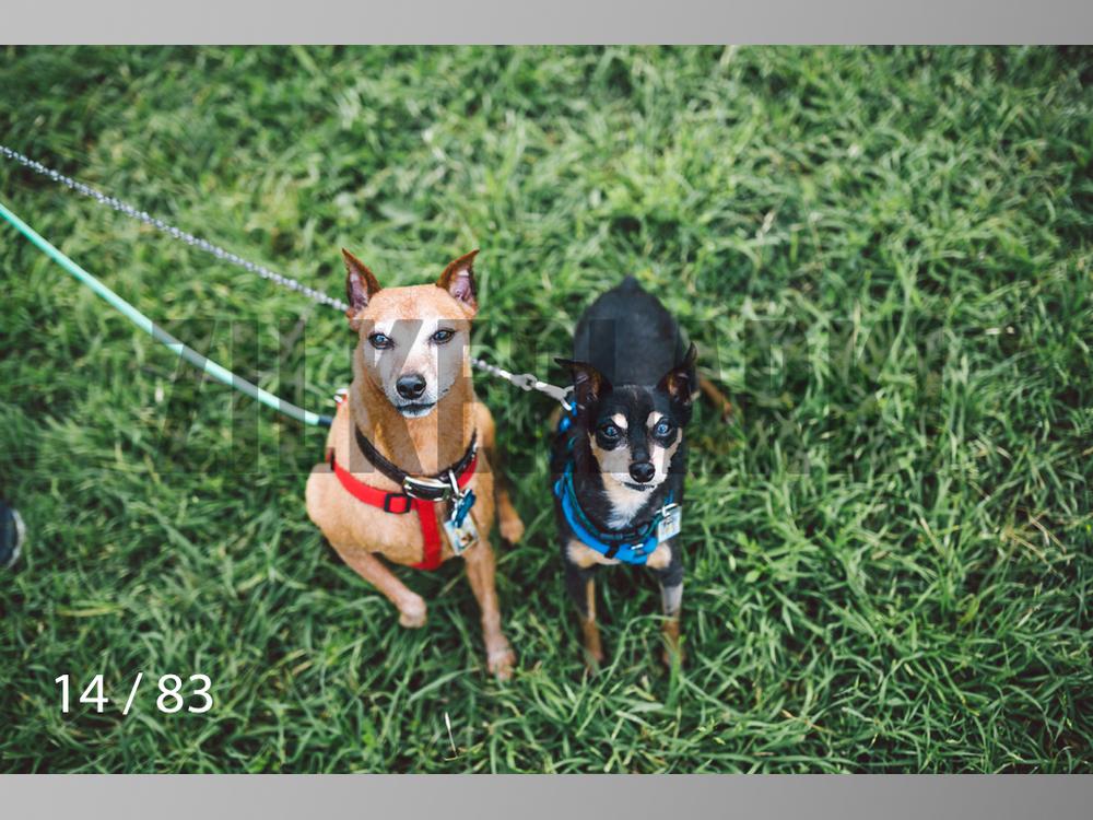 Rocky and Rusty-14.jpg