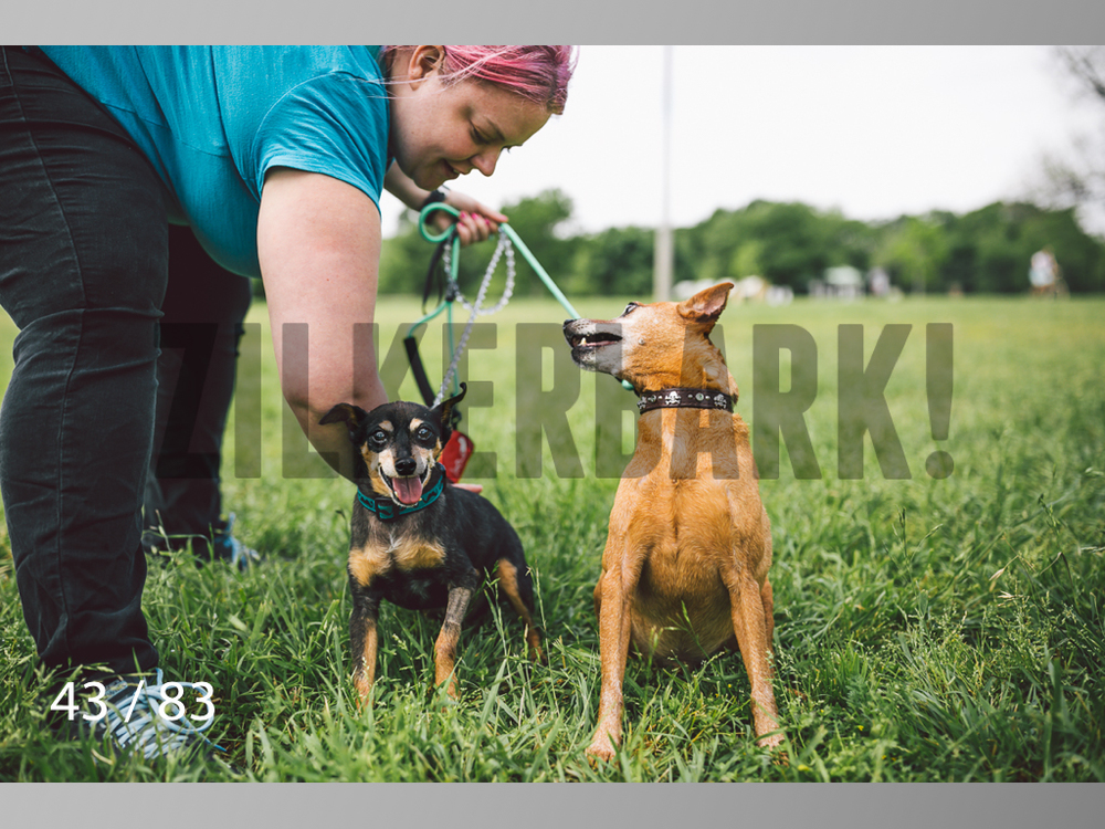 Rocky and Rusty-43.jpg