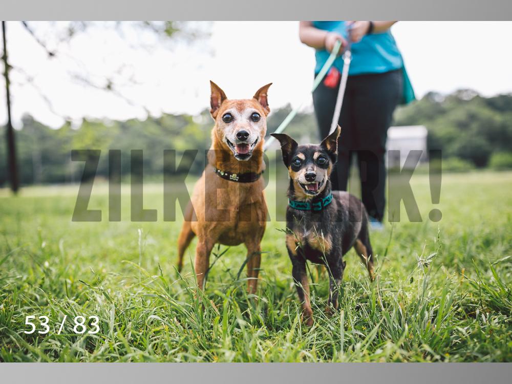 Rocky and Rusty-53.jpg