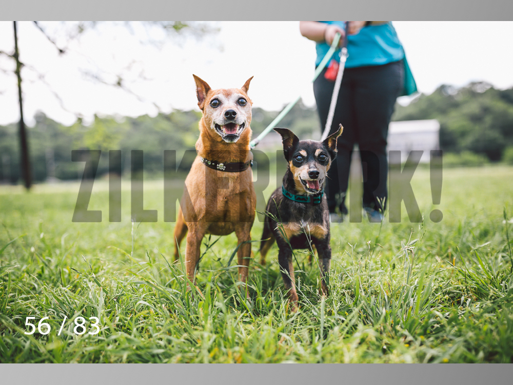 Rocky and Rusty-56.jpg