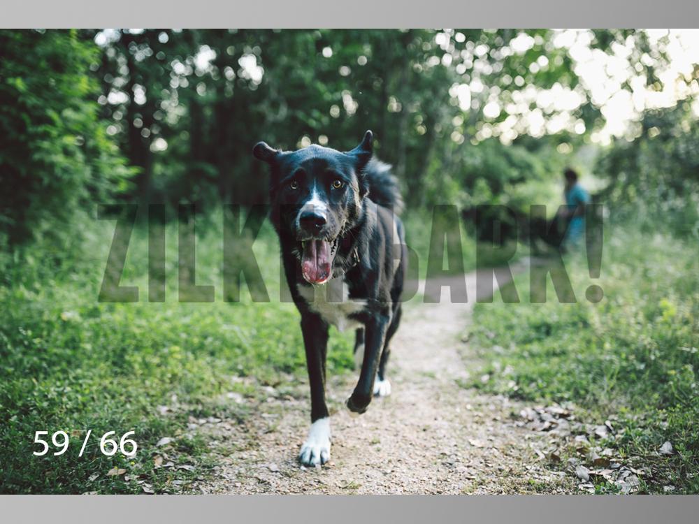 Rocco Husky-59.jpg