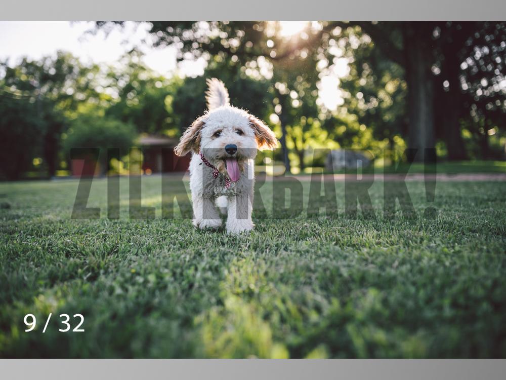 Shelby-09.jpg