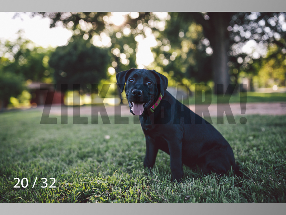 Shelby-20.jpg