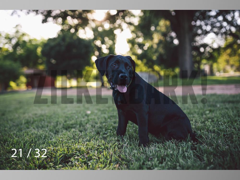 Shelby-21.jpg