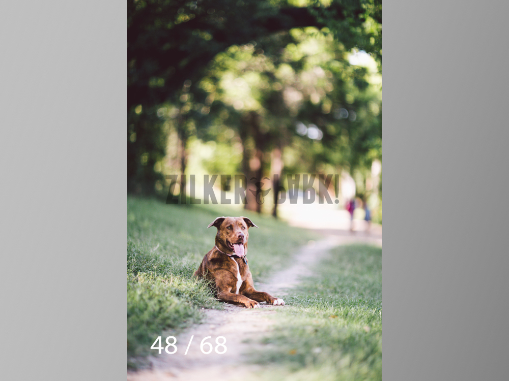 317 Maple-48.jpg