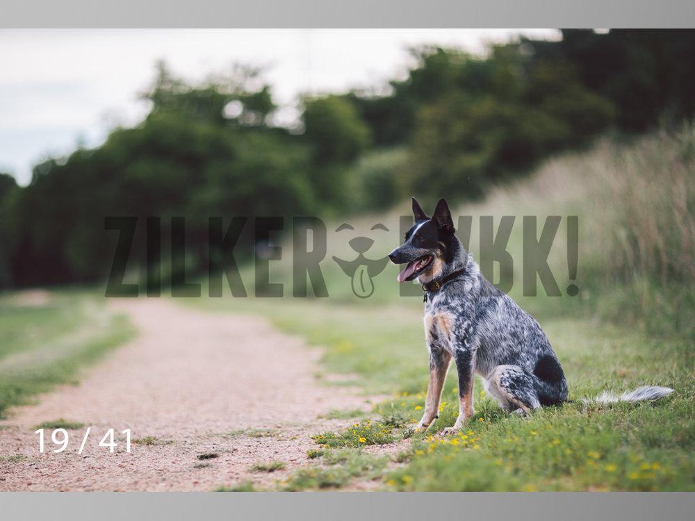 WM-19.jpg