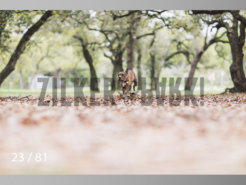 WM-23.jpg