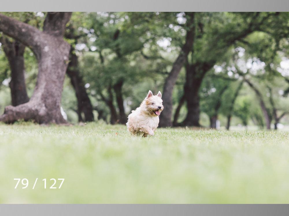 WM-079.jpg