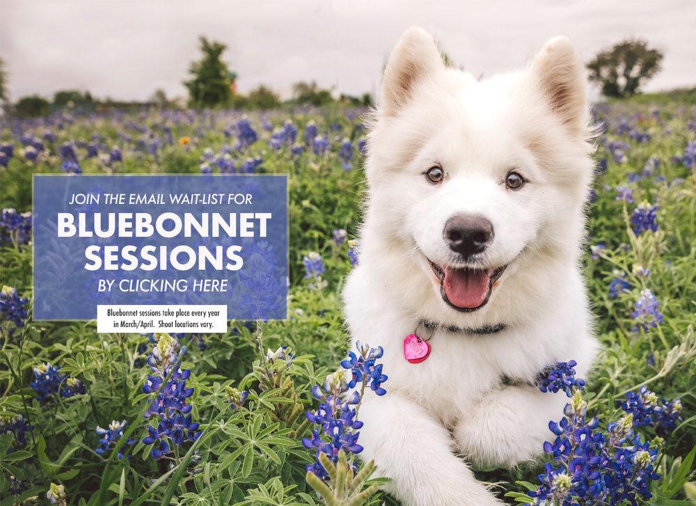 Bluebonnets Cover Image Web.jpg