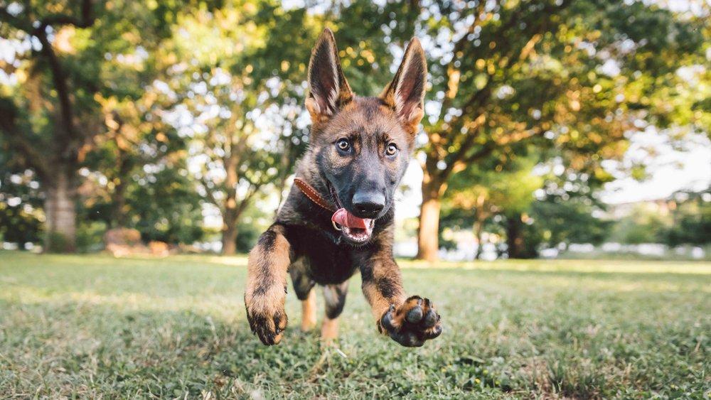 Dogs ZilkerBark Epic3-1.jpg