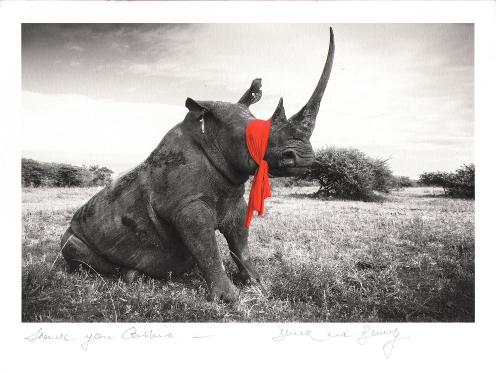 Rhino wo borders small.jpg