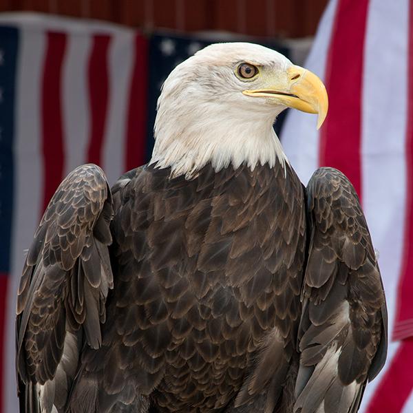 nice eagle.jpg