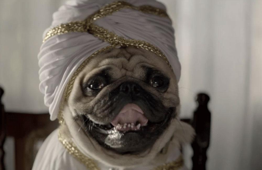 GoDaddy - Pug