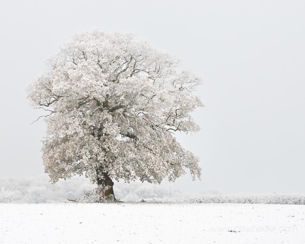 © www.pswheeler.com-8.jpg