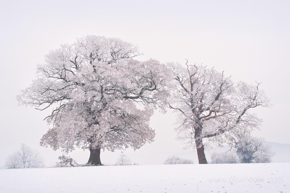 © www.pswheeler.com-10.jpg
