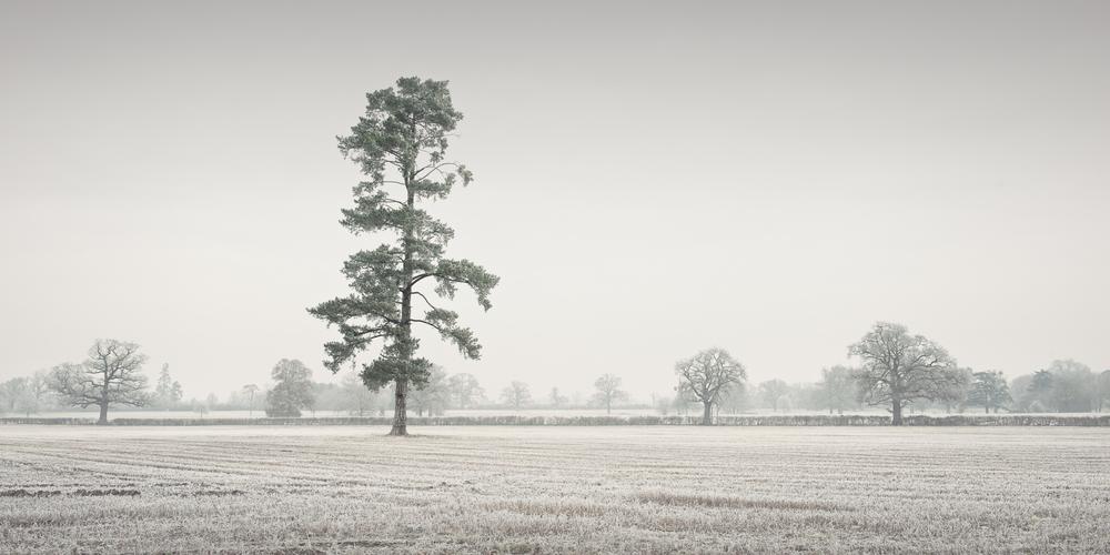 © www.pswheeler.com-38.jpg