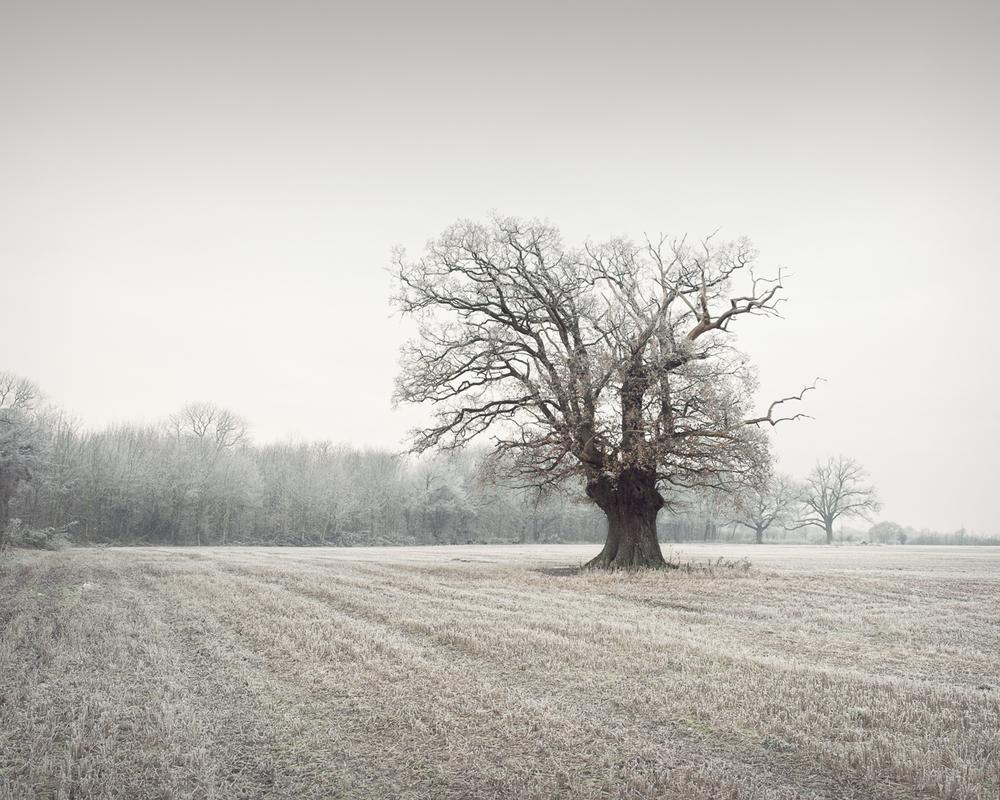 © www.pswheeler.com-39.jpg