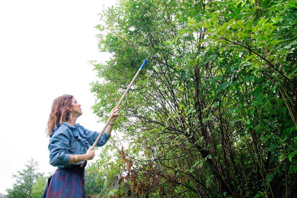 Elderberry Harvest-7.jpg