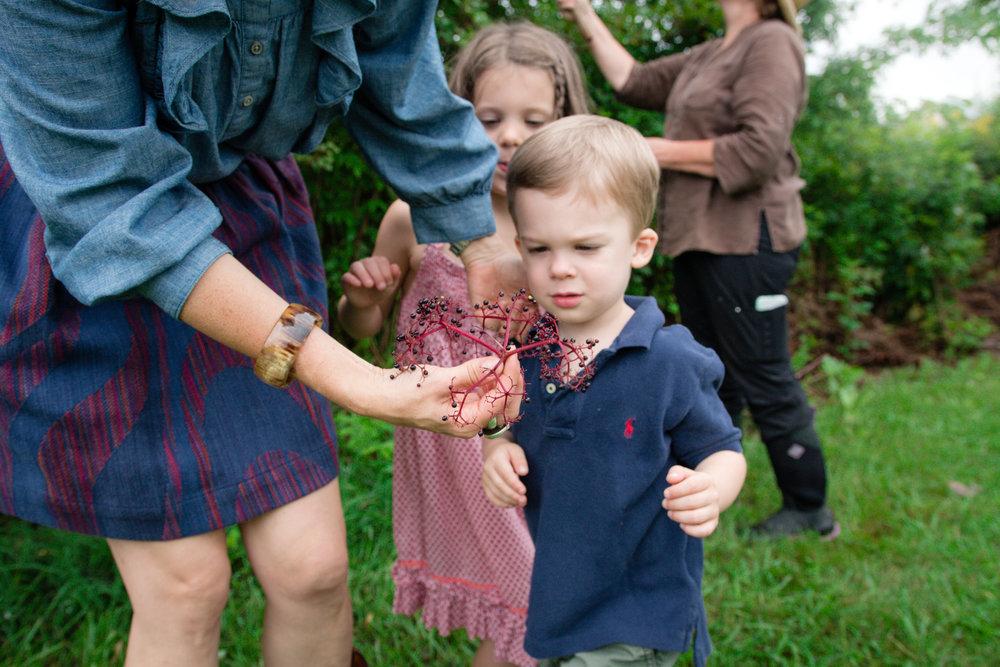 Elderberry Harvest-8.jpg