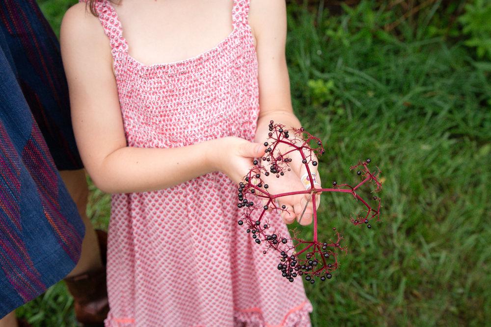 Elderberry Harvest-10.jpg