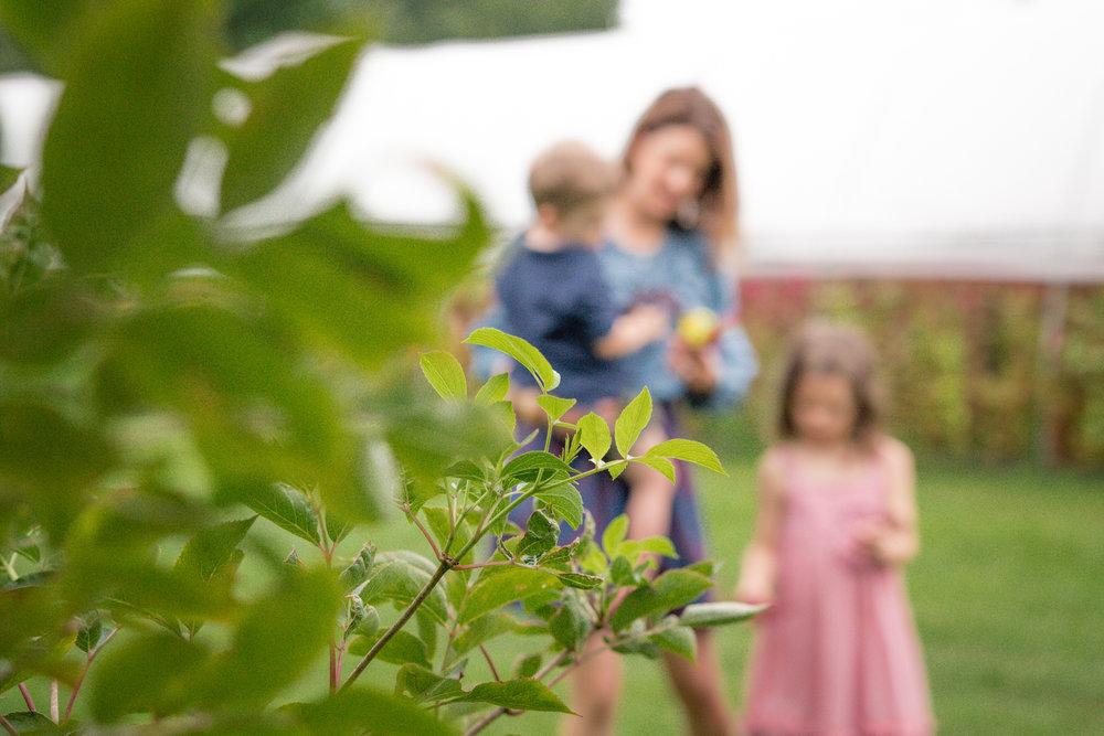 Elderberry Harvest-18.jpg