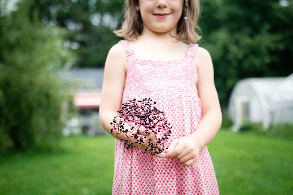 Elderberry Harvest-22.jpg