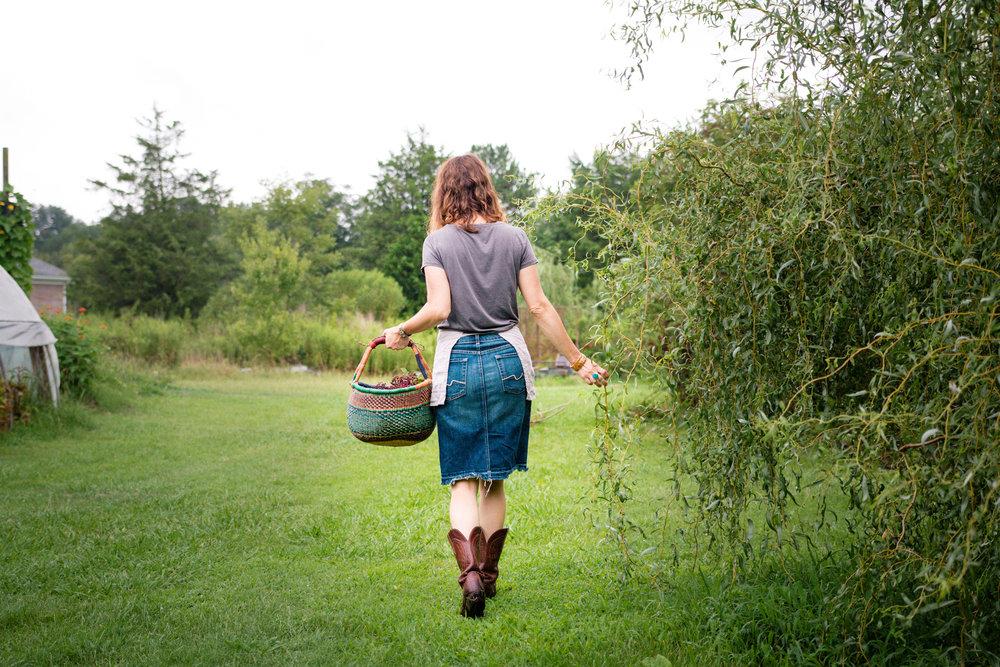 Elderberry Harvest-38.jpg