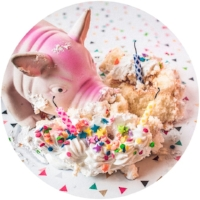 pig cupcake round.jpg