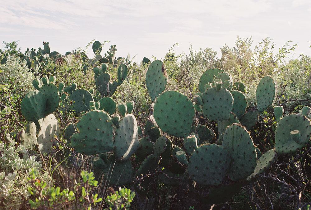 06-cacti01-web.jpg