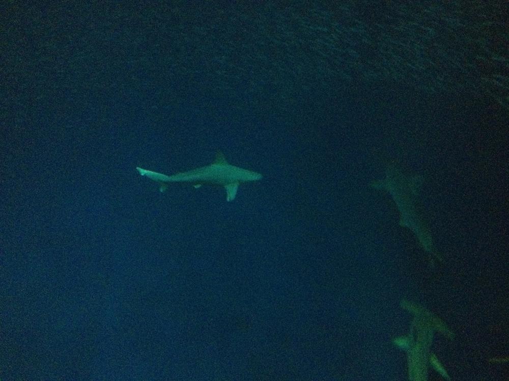 08-sharks02.jpeg