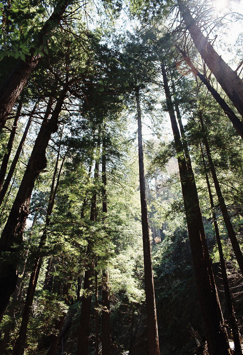 11-ewoldsen-trees-web.jpg
