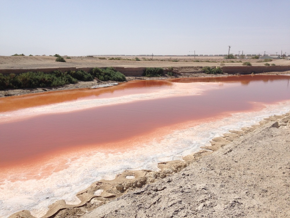 Halo bacteria color this pool by the Salton Sea rust red. : photo by Christopher Langley