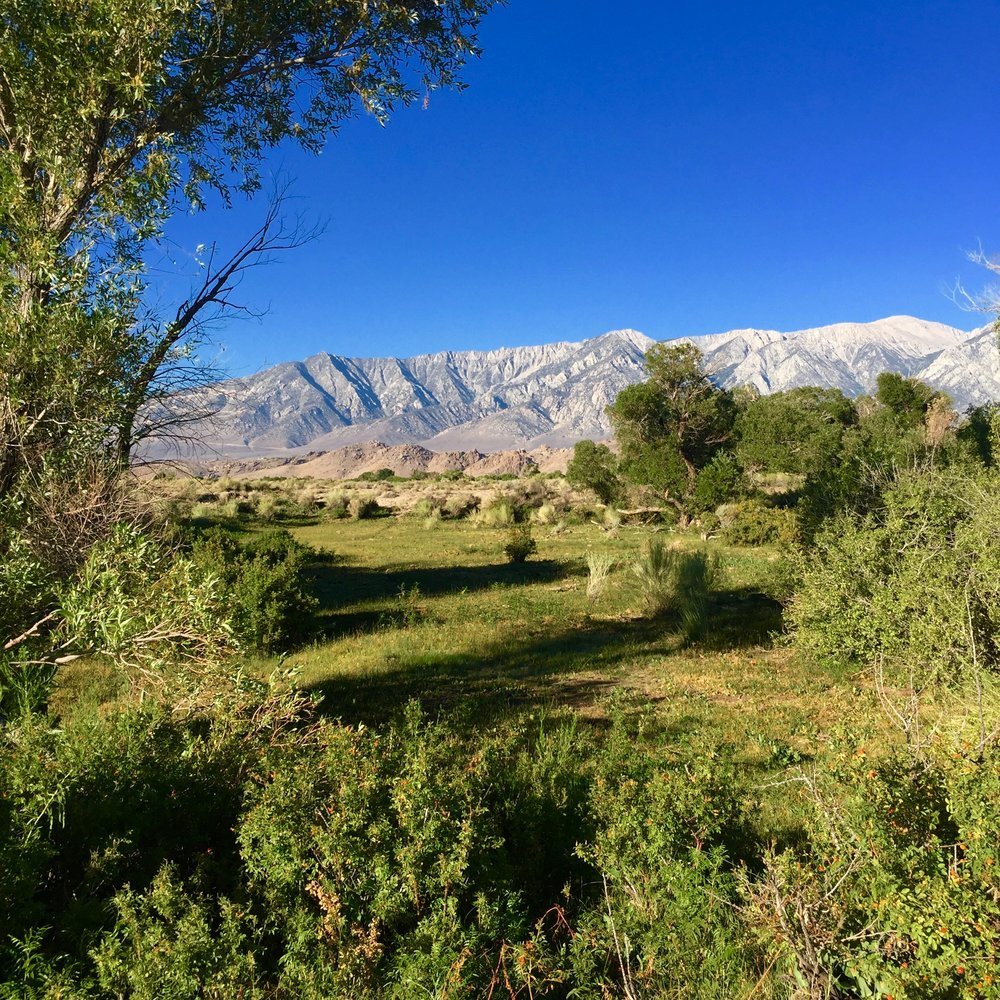 A small pasture with a copse in the old Lone Pine Creek bed, water diverted to L.A.with  the Sierra Nevada in the background. Photograph by Christopher Langley