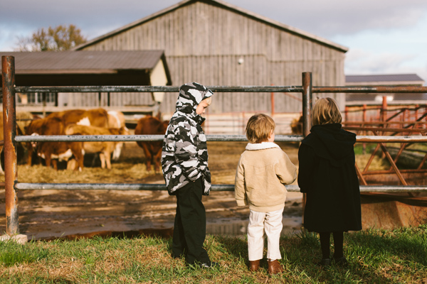 cows at rustic-chic barn wedding in london.