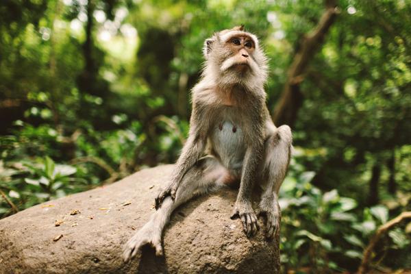 Ubud-Monkey-41.jpg