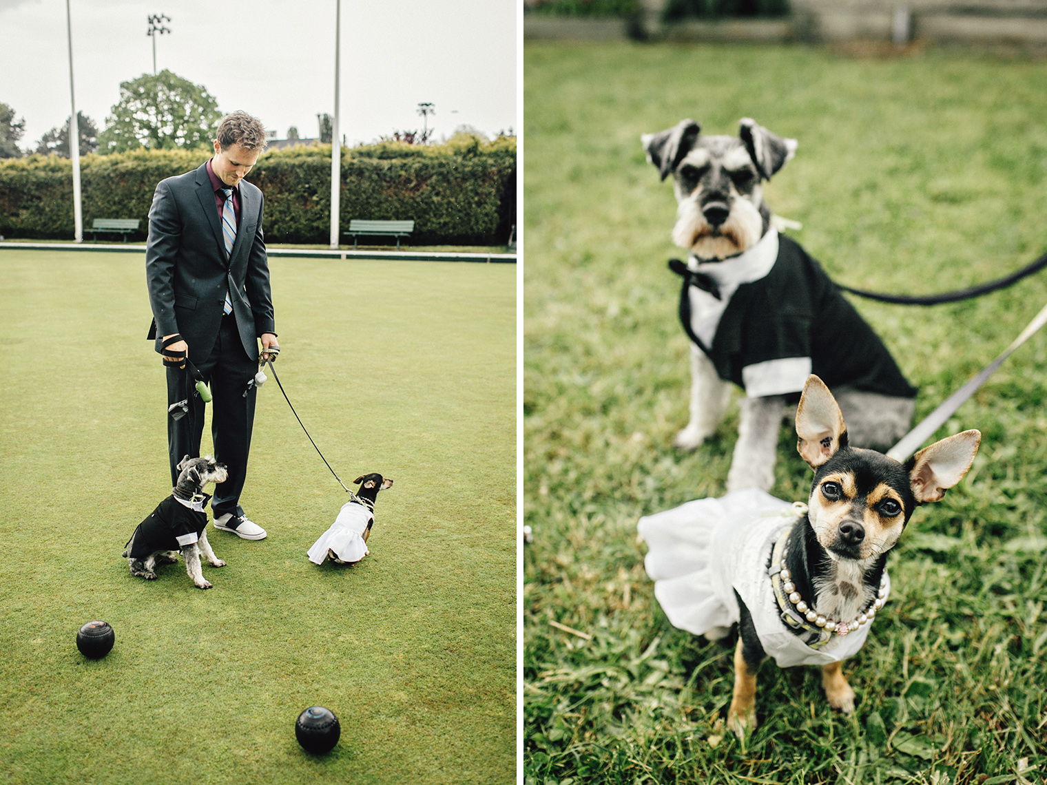 wedding pups at lawn bowling wedding
