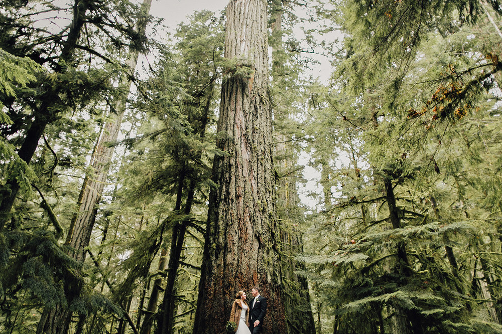 cathedral-grove-wedding-photos-parksville-00021.jpg