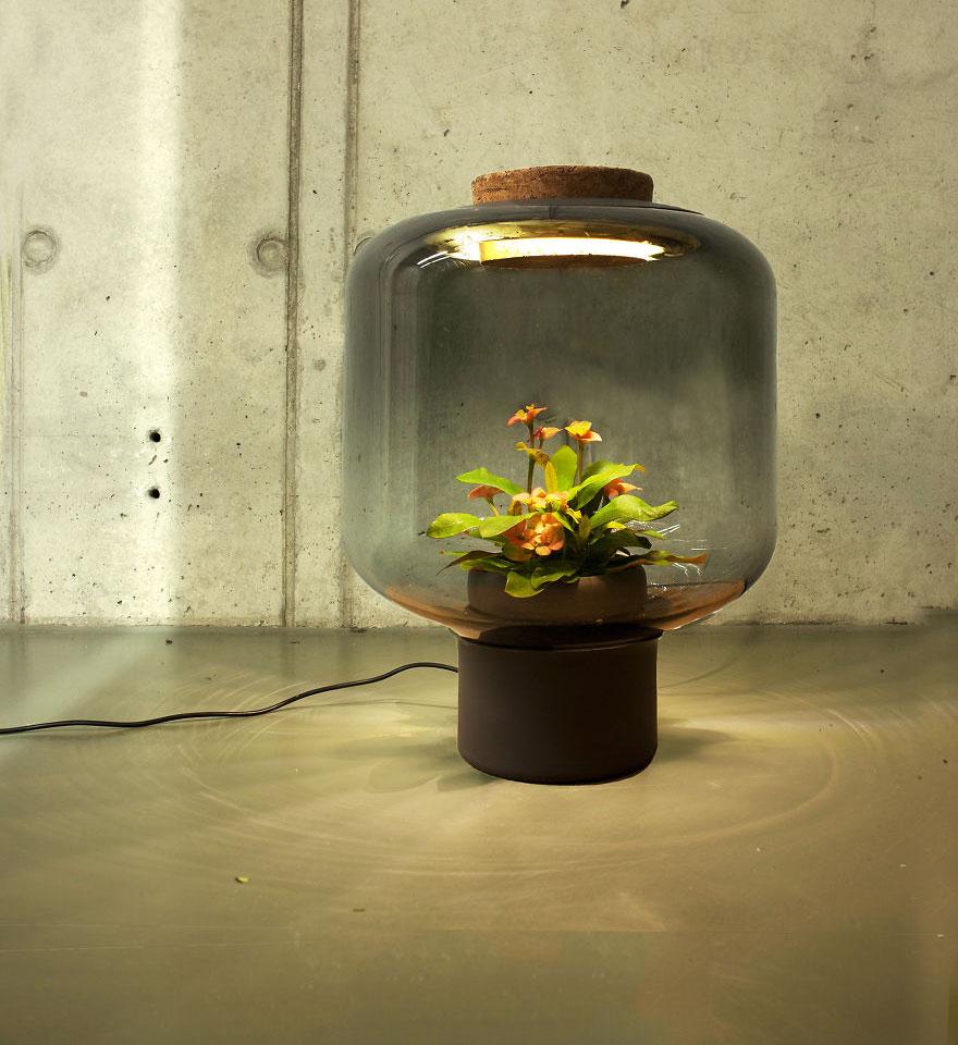 Plant Lamps 3.jpg