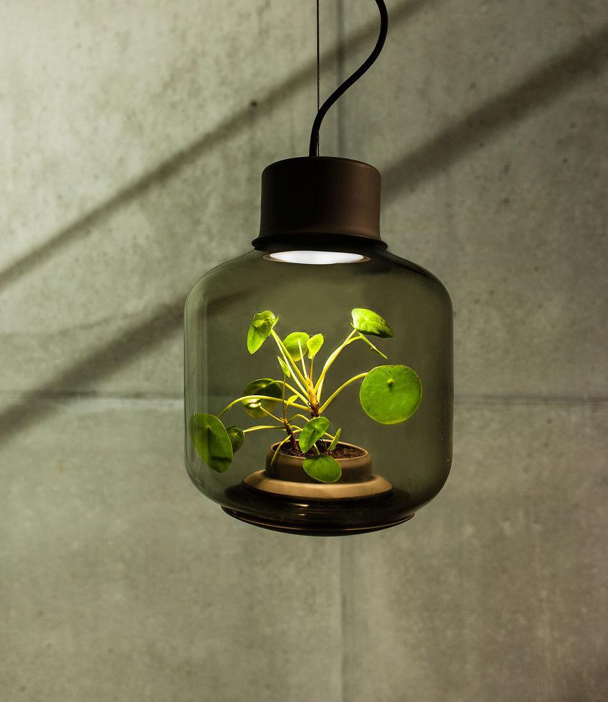 Plant Lamps 2.jpg
