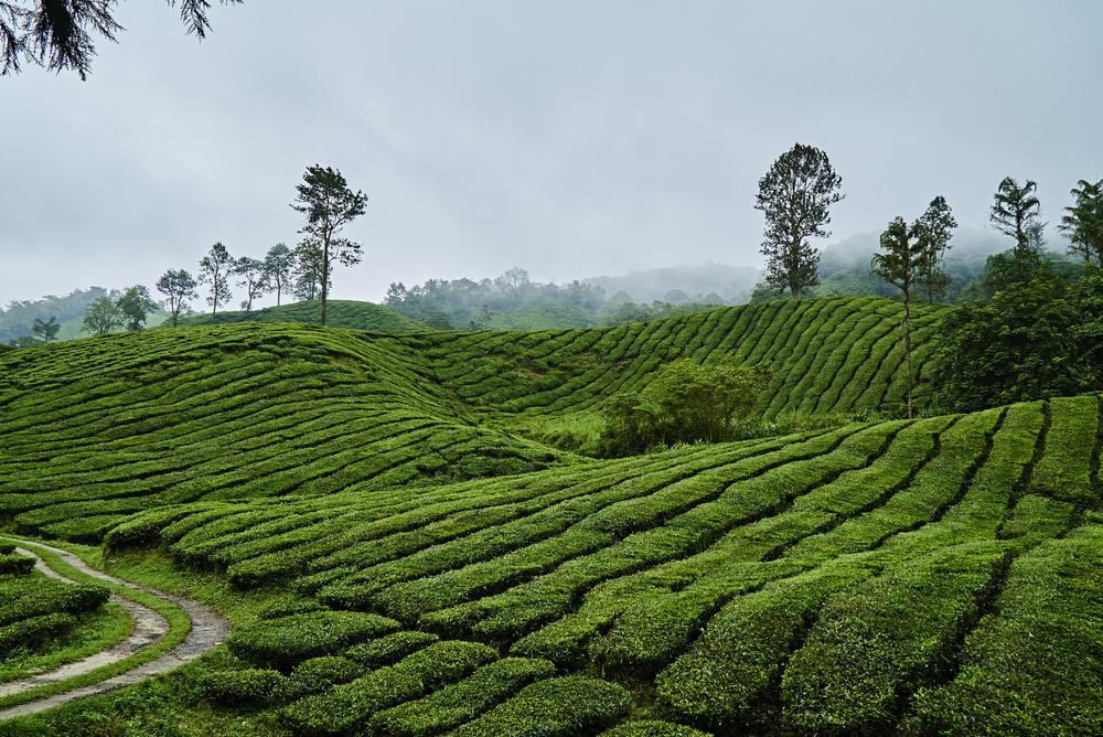 Malaysia_230_4240.jpg